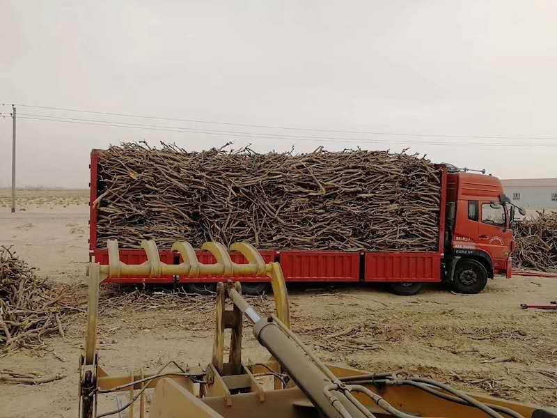 新疆乌鲁木齐原木果木炭2